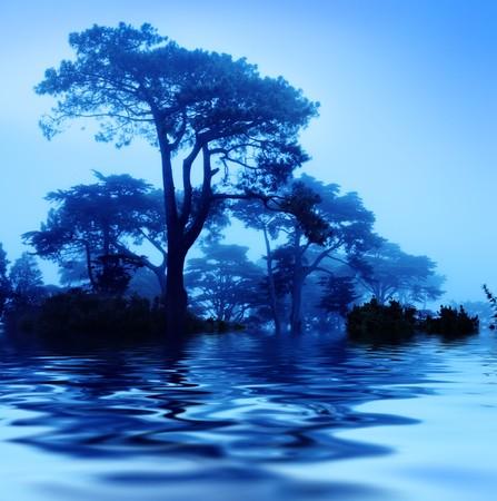 reflects: Fantasy trees at foggy morning. Soft focus. Stock Photo