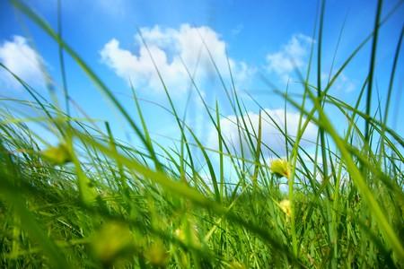 low angle views: Fresca hierba verde bajo el cielo azul Foto de archivo