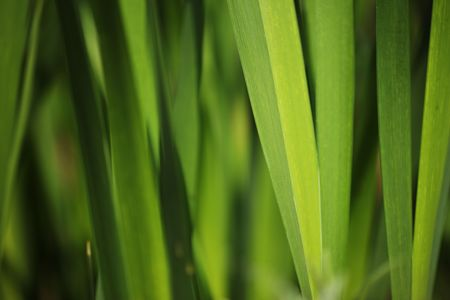 Green grass background. Macro close-up, shallow DOF. photo