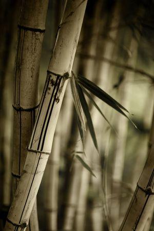 dof: Bamboo forest background. Shallow DOF.