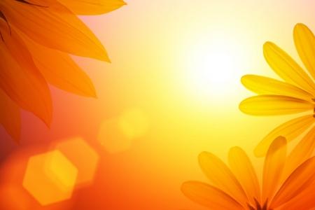sol radiante: Sol de fondo con los detalles de girasol.