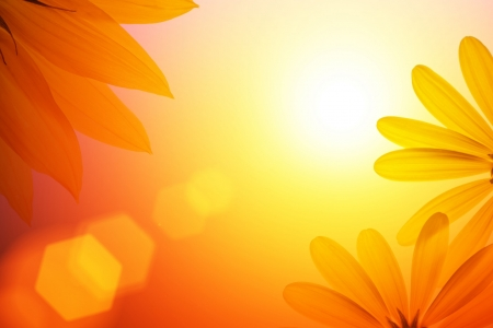 Sunshine background with sunflower details. photo