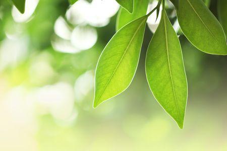 Beautiful fresh green leaves macro close-up Stock Photo - 5948753
