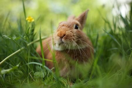 Cute rabbit in green grass. Close-up, shallow DOF.