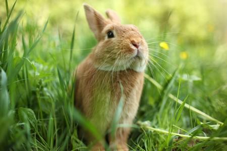 dof: Cute rabbit in green grass. Close-up, shallow DOF.
