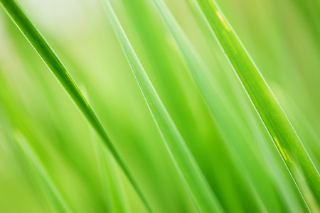 Abstract background of fresh green grass. Extreme close-up, shallow DOF. photo