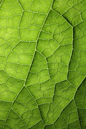 natural: Green leaf background texture, macro