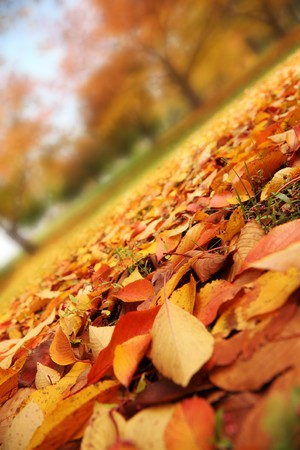 Beautiful red and yellow leaves covering autumn park. Closeup.