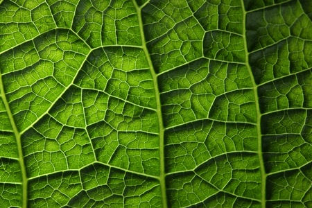 Green leaf background texture, macro photo