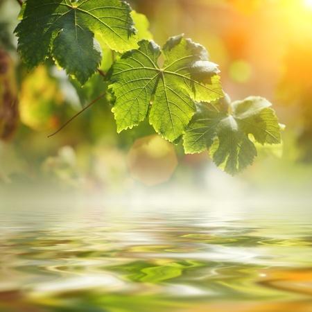 leaf grape: Uva deja sobre el agua. DOF superficial.