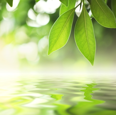 reflects: Green leaves reflecting in water, closeup.