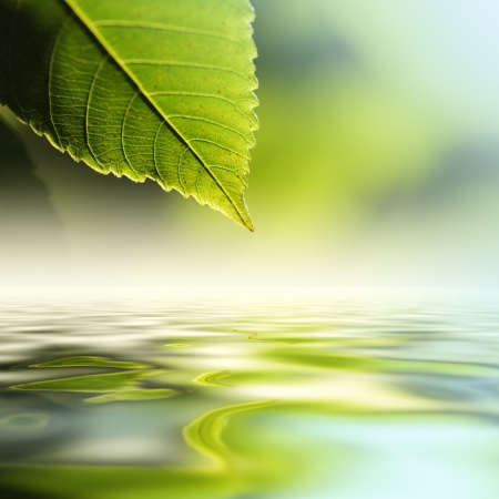 Green leaf reflecting in river water, closeup. Copyspace.