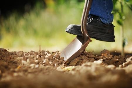 Kopanie wiosny gleby z szufli. Makro, płytkie DOF.