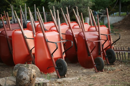 stored: Red wheelbarrows stored in garden.