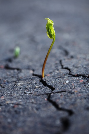 Green plant growing through dry cracked soil.