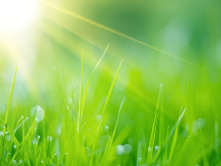 Green grass under rays of sun. Closeup, shallow DOF. Stock Photo