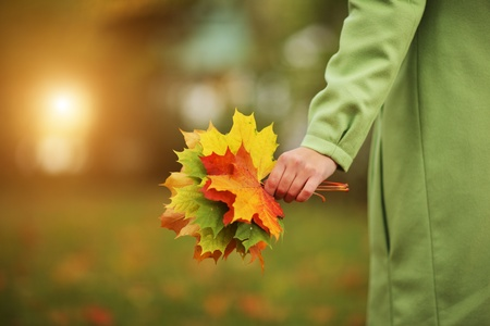 autumn colour: Female hand with colorful bouquet of autumn leaves. Closeup.