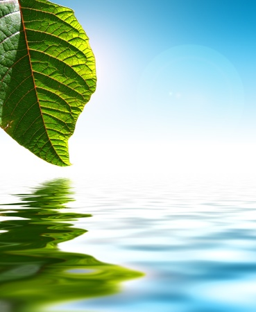 with reflection: Fresh Green Leaf Over Water Background Stock Photo