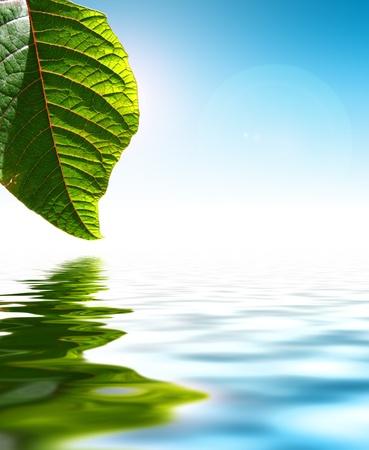 Fresh Green Leaf Over Water Background Foto de archivo