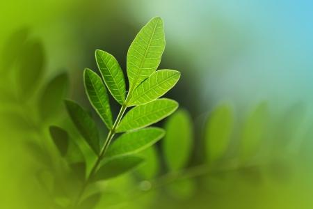 shallow dof: Green leaf macro closeup. Shallow DOF.
