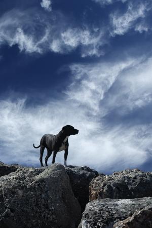 dog rock: Dog on rocks over sky background