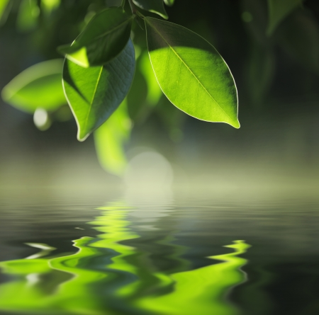 reflected: Green leaves reflecting in pond water. Closeup. Stock Photo