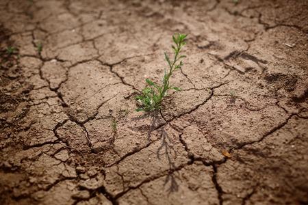 Green grass growing through dry cracks. Shallow DOF, focus on plant. photo