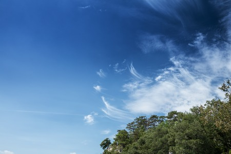 Tree foliage against blue sky background 版權商用圖片