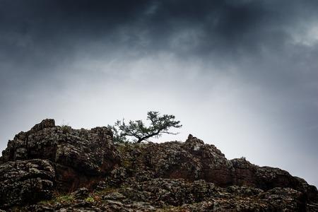 �rbol de pino que crece en acantilados de roca de la monta�a bajo el cielo tempestuoso nublado. photo
