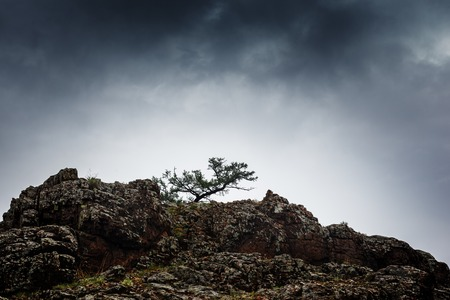 Pine tree growing on rock cliff mountain under stormy cloudy sky. photo