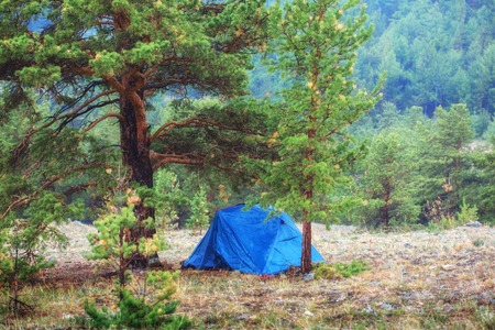 Tent in the woods, pine forest in background. 版權商用圖片