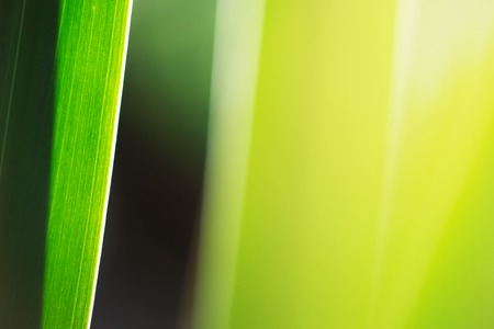 Green grass macro abstract background. Copyspace.