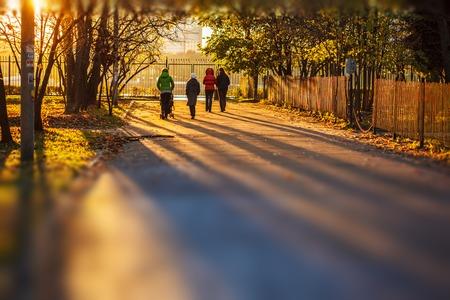 lejos: Puesta de sol en el parque de amarillo otoño