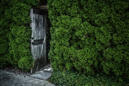 Wooden door in green floral wall background in garden. Copyspace.