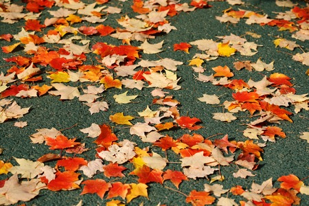 Red, yellow and orange autumn leaves fall background