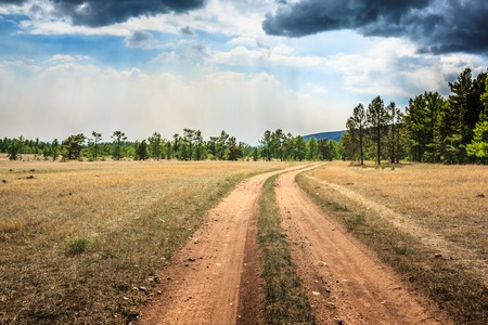 Dirt road towards pine forest in Siberia