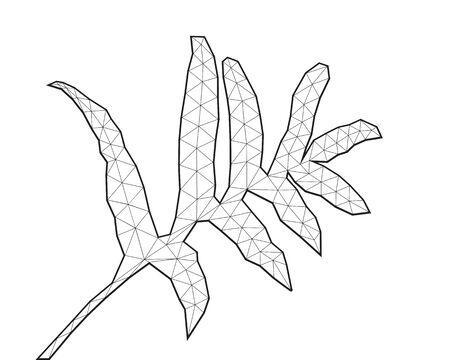 Polygonal Fern Leaf, Black and White Line Art, Low Poly Vector Illustration