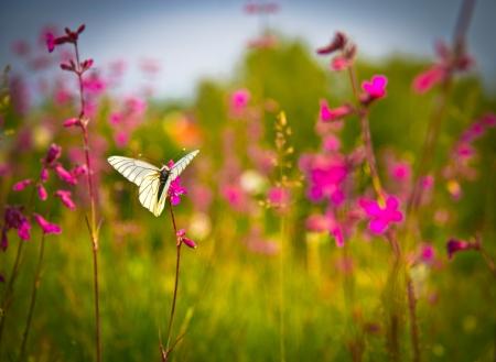 Pillangó és rózsaszín virágok Stock fotó