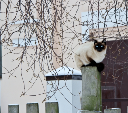 Cat on the fence Stock Photo - 14329701