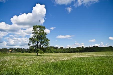 Rural Landscape Stock Photo - 14329615