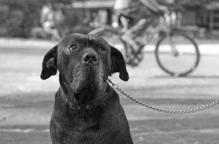 Dog Stock Photo - 14384468