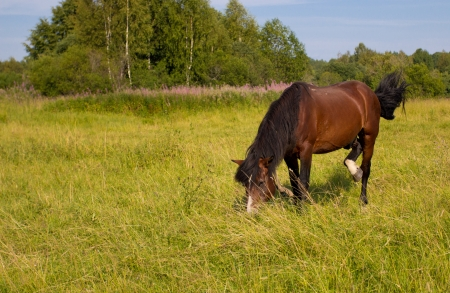 The horse grazes in a meadow photo