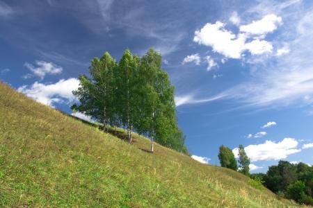Birch trees growing on a hill near the village. Russia, Yaroslavl photo