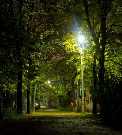 urban jungle: Jungla urbana por la noche. Crep�sculo Street Fall City Foto de archivo