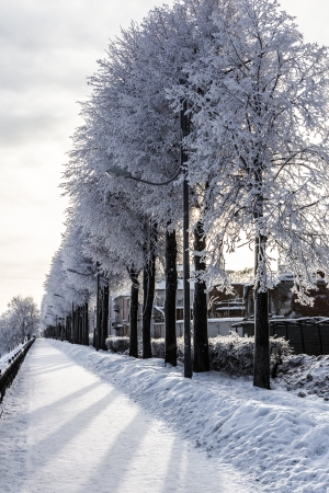Snowy trees stand in a line on the quay of Yaroslavl in winter day. Russia Stock Photo - 17307812