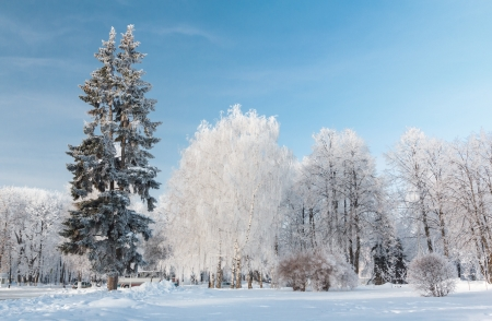Trees powder with snow on a cold winter day. Yaroslavl. Russia Stock Photo - 17307801