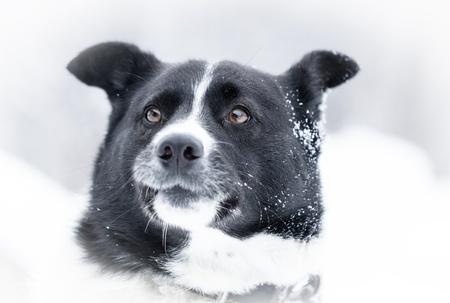 Beautiful dog standing under snowfall winter day Stock Photo - 17345209