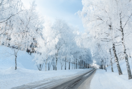 Winter road running along the snow-covered trees. Russia, Yaroslavl Stock Photo - 17345222