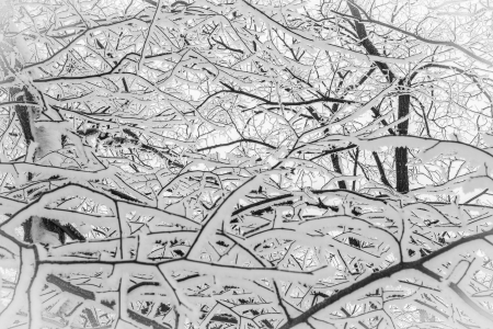 Abstract network of snow-covered branches of trees Stock Photo - 17375948