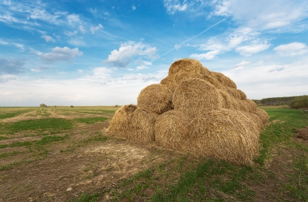 haymow: Bales of hay on the farm field, evening rural landscape Stock Photo
